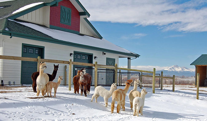 Xanadu Farm Alpacas