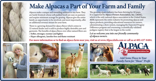Make alpacas part of your family.