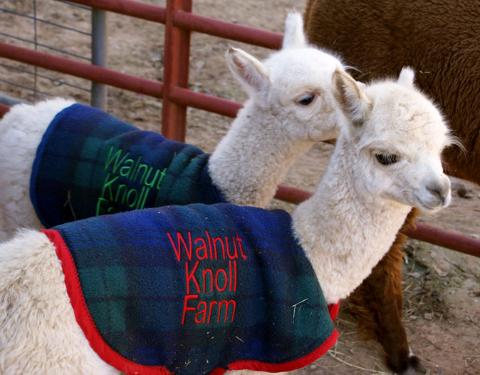 Walnut Knoll Farm, LLC