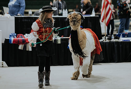 Alpaca Costume Contest