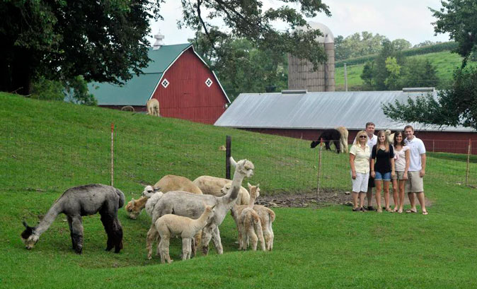 Irish Meadows Alpaca Farm